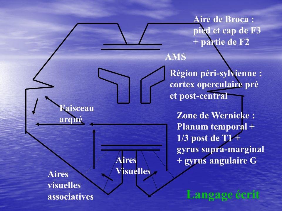 Langage écrit Aire de Broca : pied et cap de F3 + partie de F2 AMS