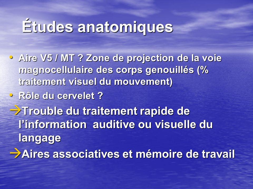 Études anatomiques Aire V5 / MT Zone de projection de la voie magnocellulaire des corps genouillés (% traitement visuel du mouvement)