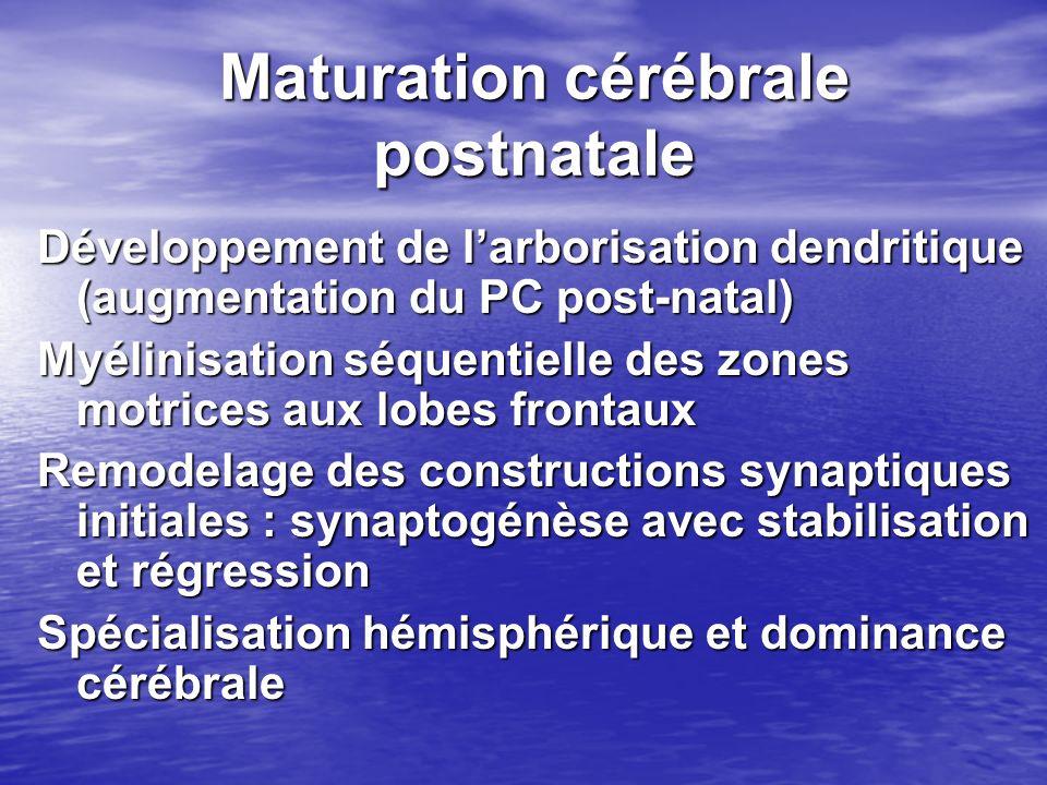 Maturation cérébrale postnatale