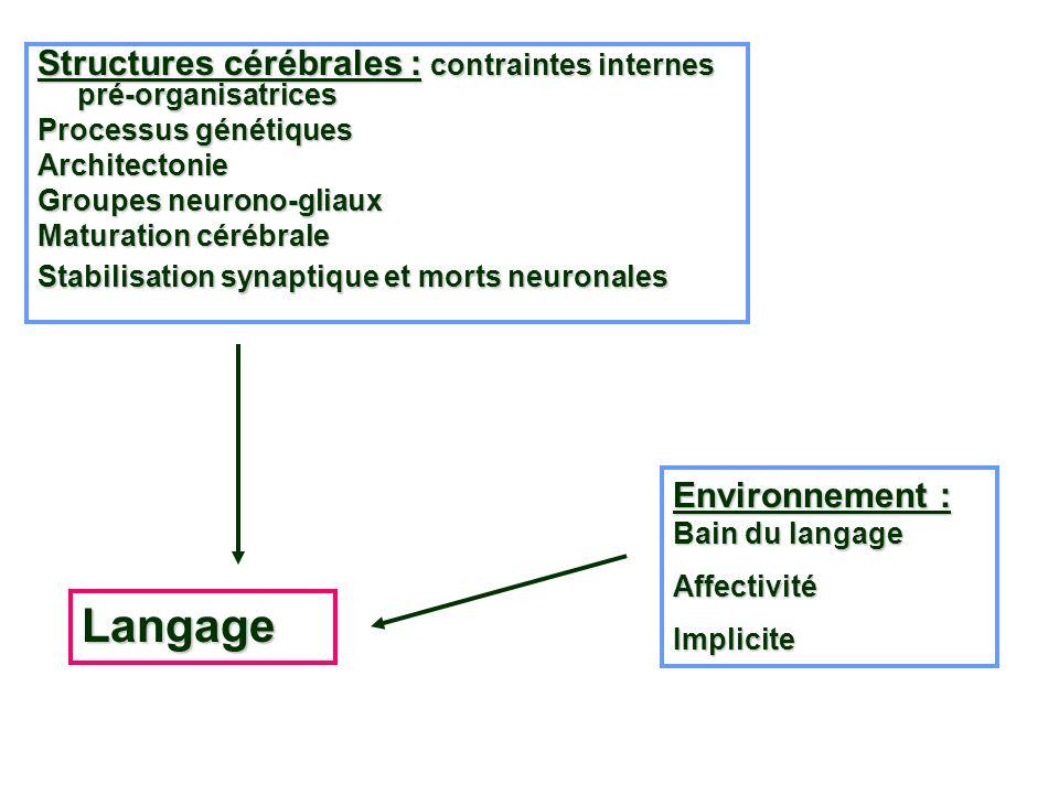 Structures cérébrales : contraintes internes pré-organisatrices