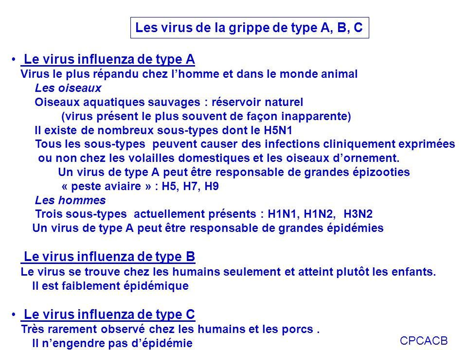 Les virus de la grippe de type A, B, C