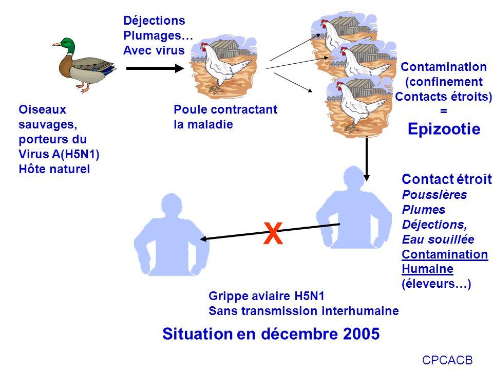 X Epizootie Situation en décembre 2005 Contact étroit Déjections
