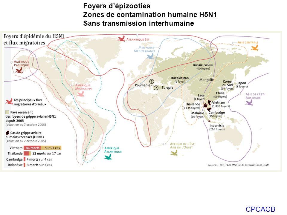 Foyers d'épizooties Zones de contamination humaine H5N1 Sans transmission interhumaine