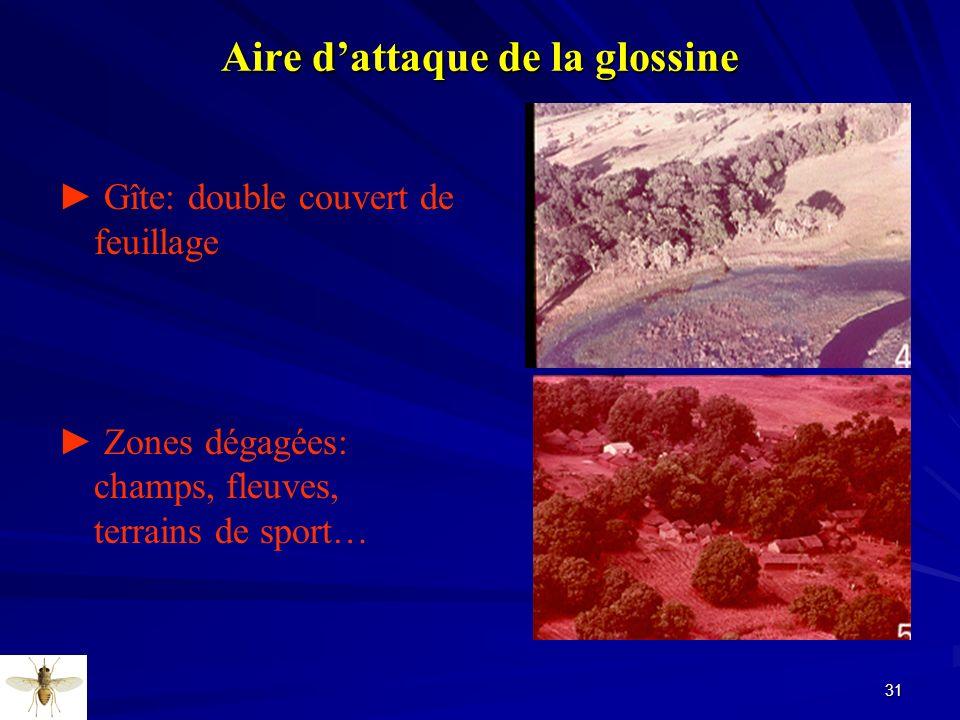Aire d'attaque de la glossine