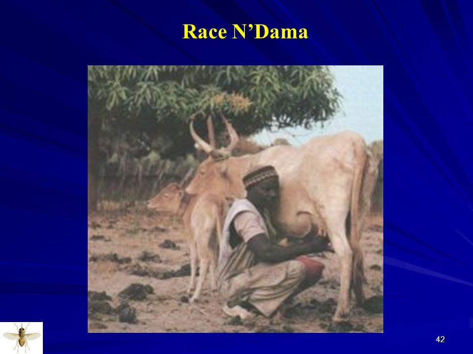 Race N'Dama