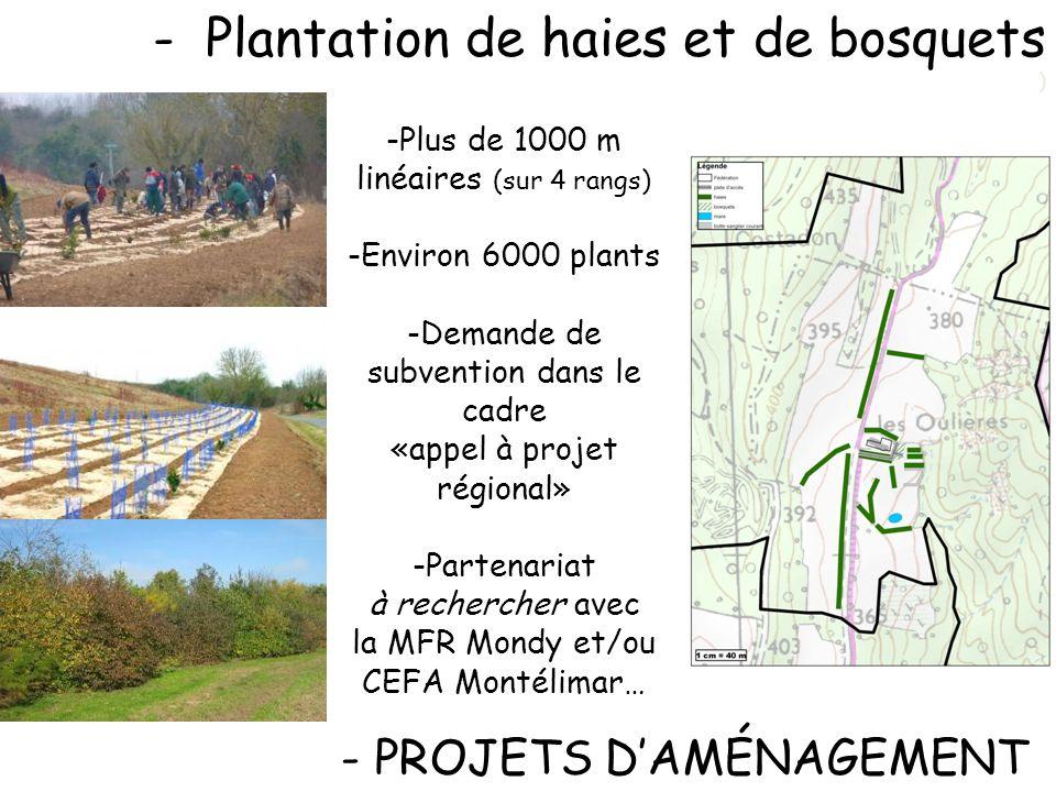 Plantation de haies et de bosquets