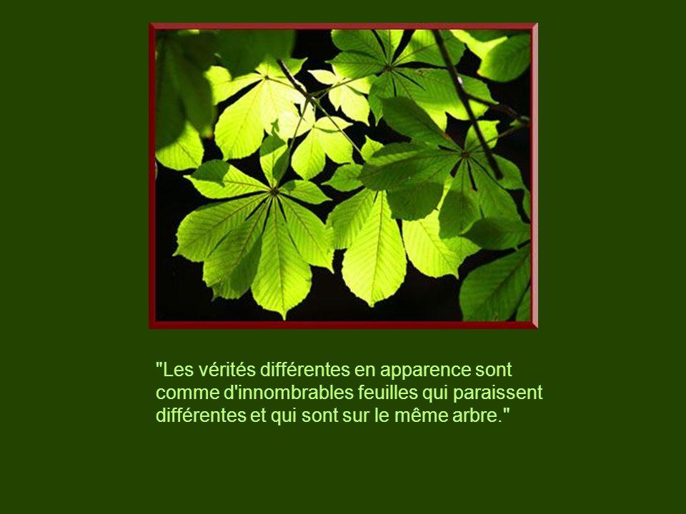 Les vérités différentes en apparence sont comme d innombrables feuilles qui paraissent différentes et qui sont sur le même arbre.