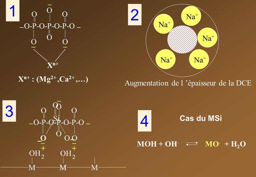1 2 3 4 Xn+ : (Mg2+ ,Ca2+ ,…) O-P-O-P-O-P-O O Xn+ Na+
