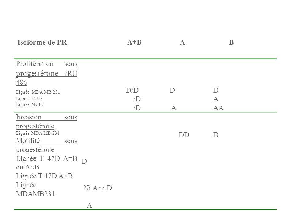 Prolifération sous progestérone /RU 486
