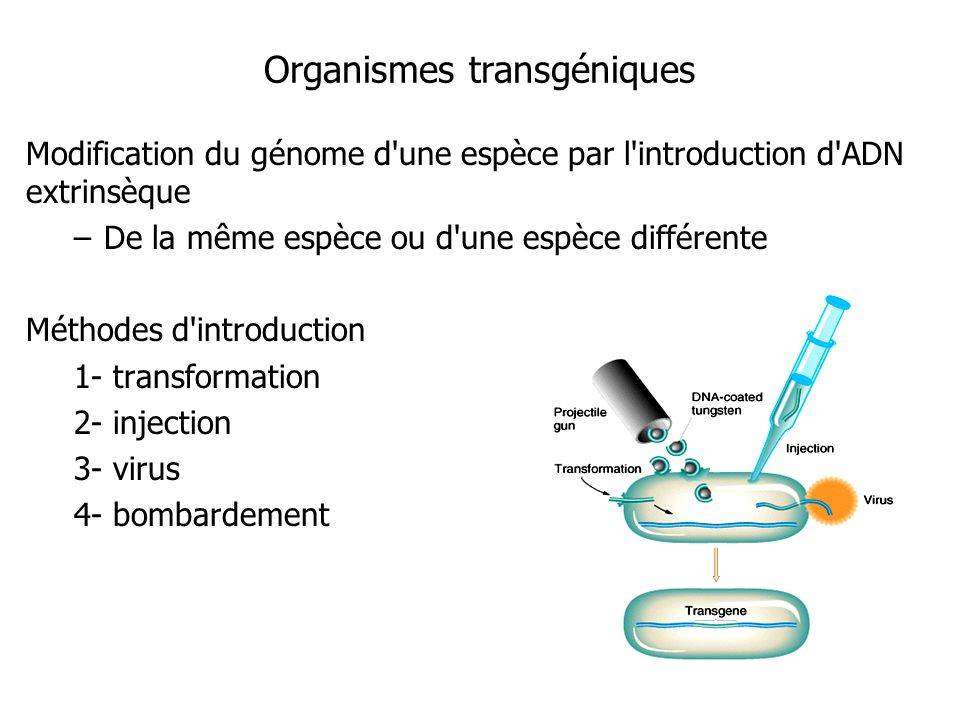 Organismes transgéniques
