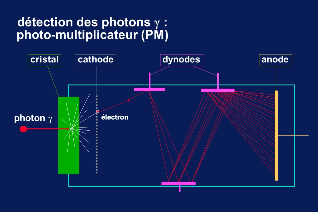 détection des photons : photo-multiplicateur (PM)