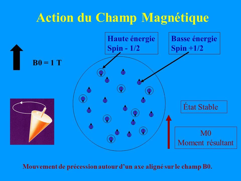 Action du Champ Magnétique