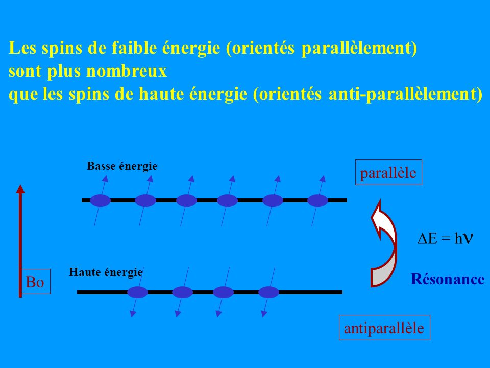 Les spins de faible énergie (orientés parallèlement)