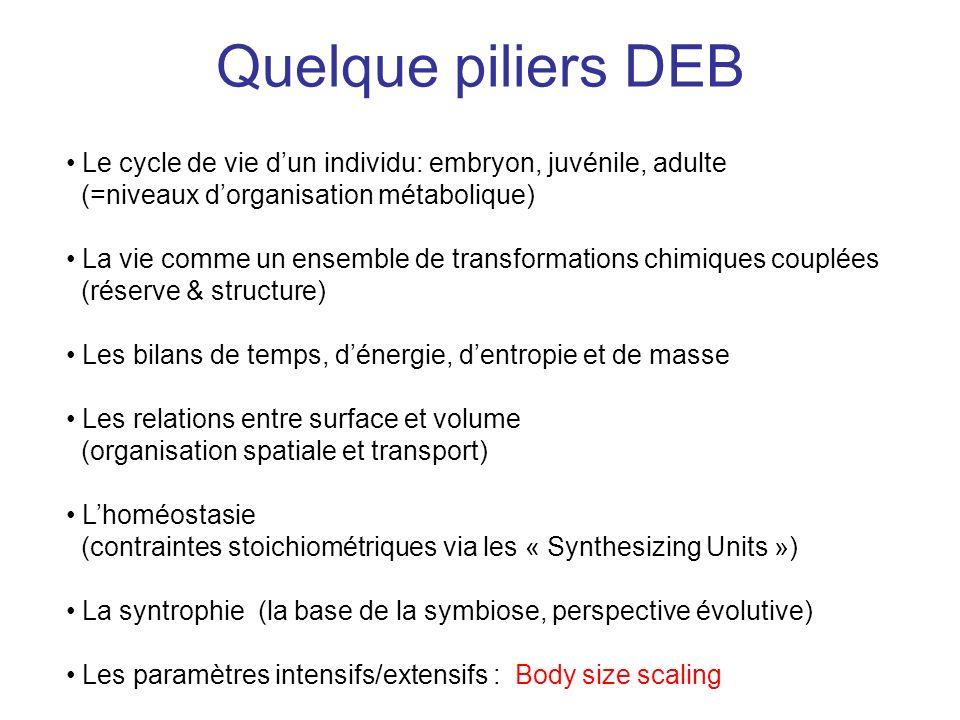 Quelque piliers DEB Le cycle de vie d'un individu: embryon, juvénile, adulte. (=niveaux d'organisation métabolique)