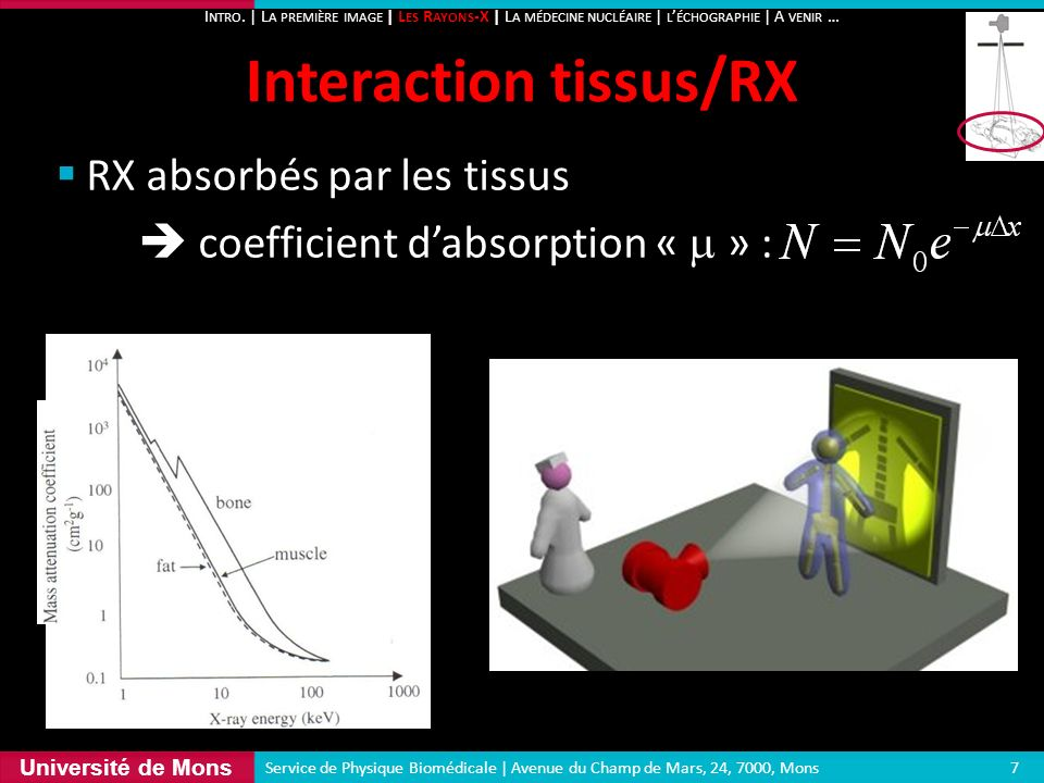 Interaction tissus/RX
