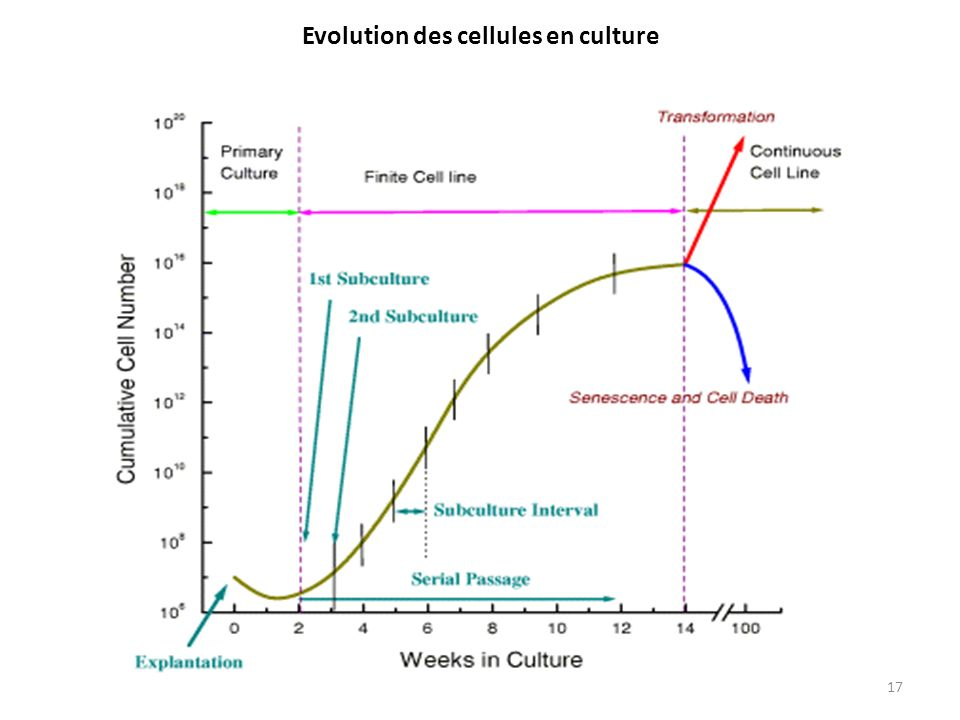 Evolution des cellules en culture