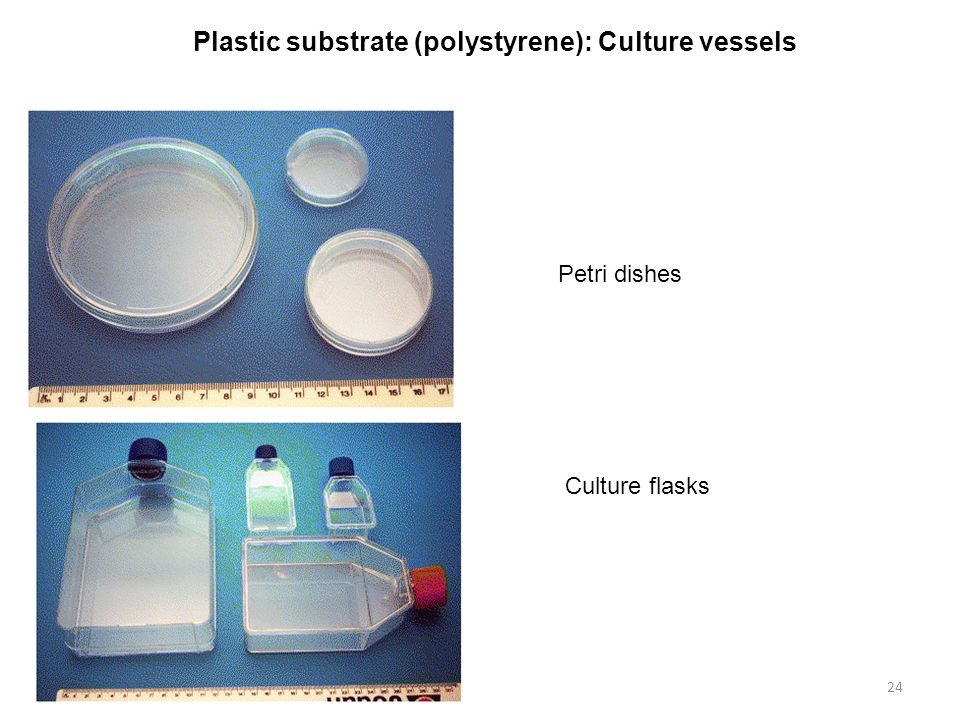 Plastic substrate (polystyrene): Culture vessels
