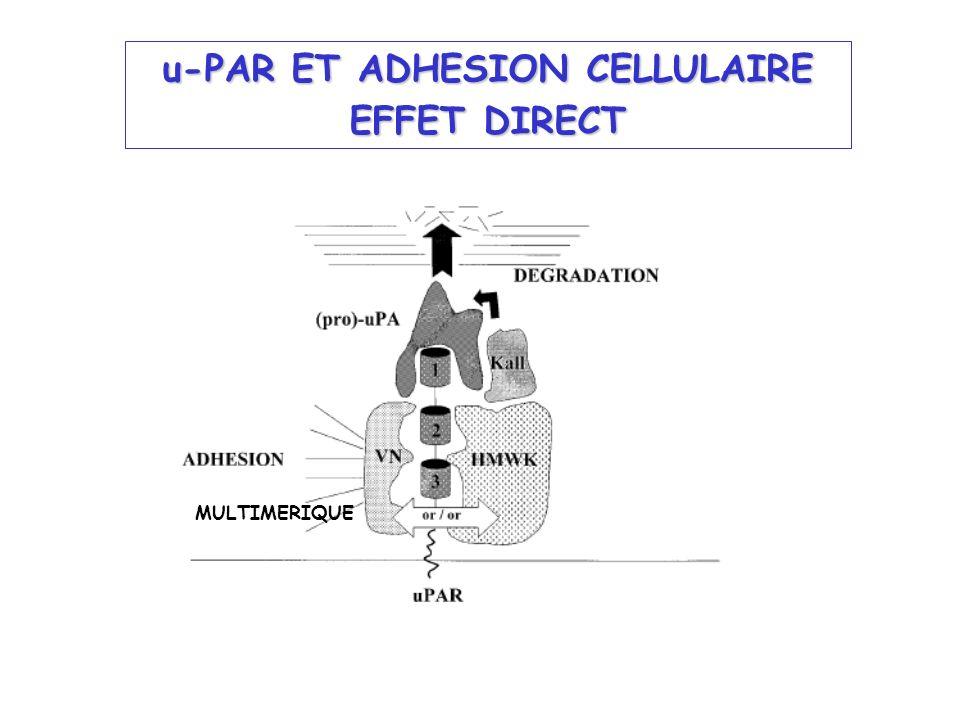 u-PAR ET ADHESION CELLULAIRE