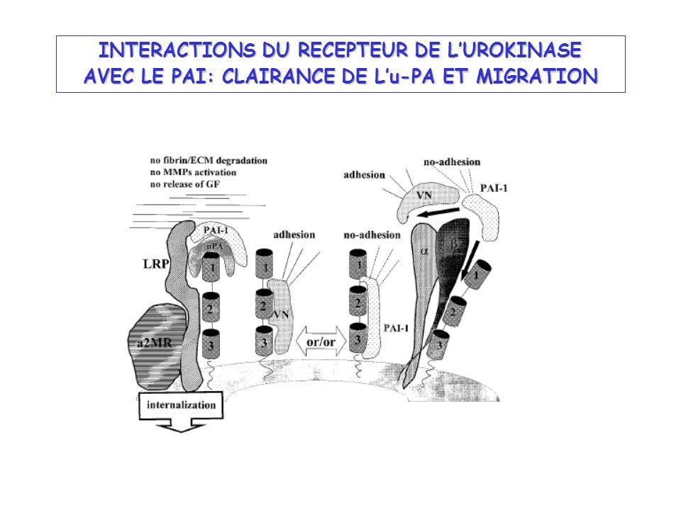 INTERACTIONS DU RECEPTEUR DE L'UROKINASE