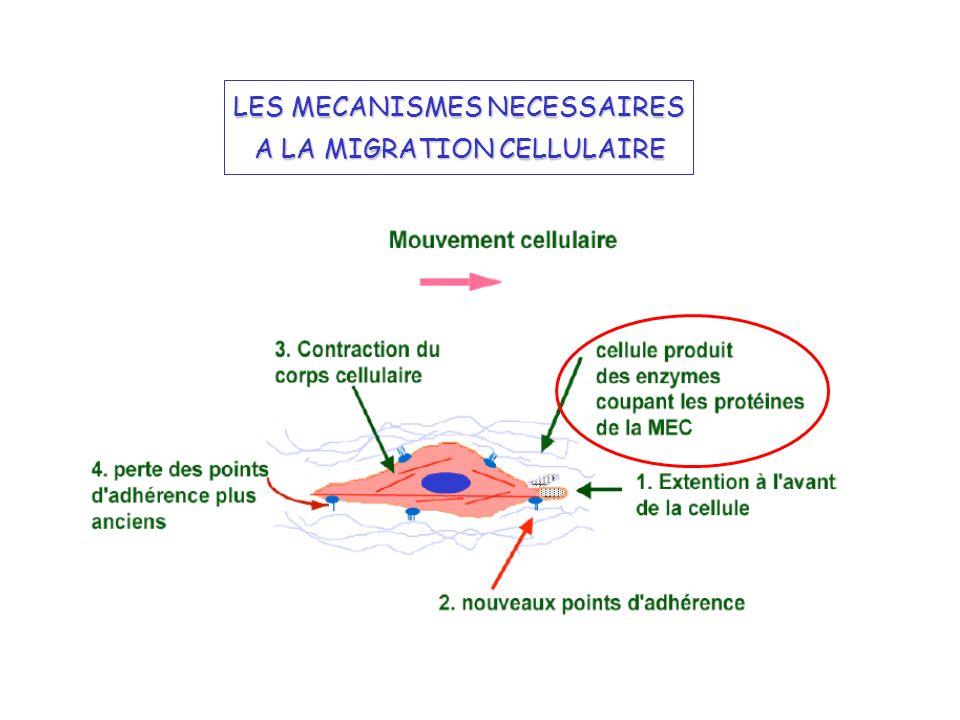 LES MECANISMES NECESSAIRES A LA MIGRATION CELLULAIRE