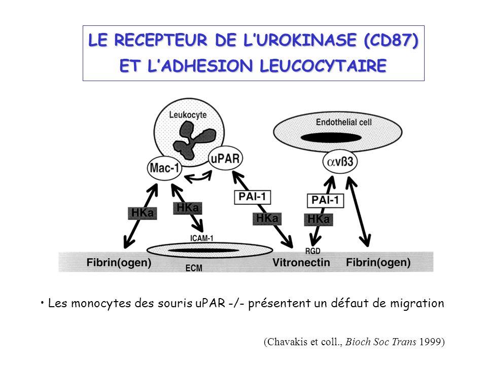 LE RECEPTEUR DE L'UROKINASE (CD87) ET L'ADHESION LEUCOCYTAIRE