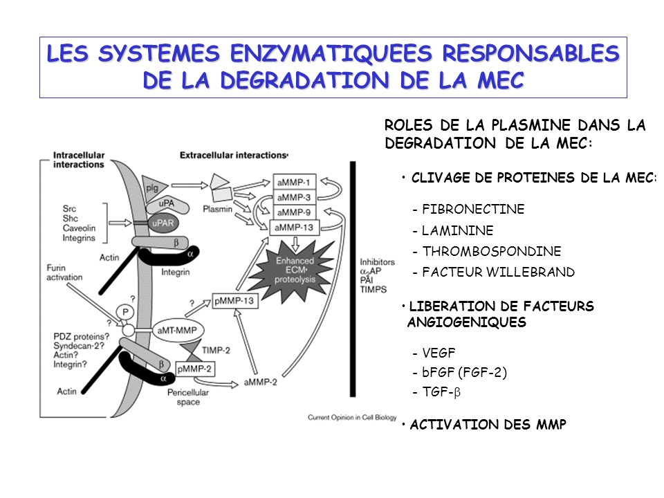 LES SYSTEMES ENZYMATIQUEES RESPONSABLES DE LA DEGRADATION DE LA MEC
