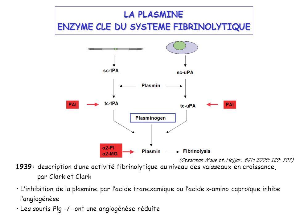 ENZYME CLE DU SYSTEME FIBRINOLYTIQUE