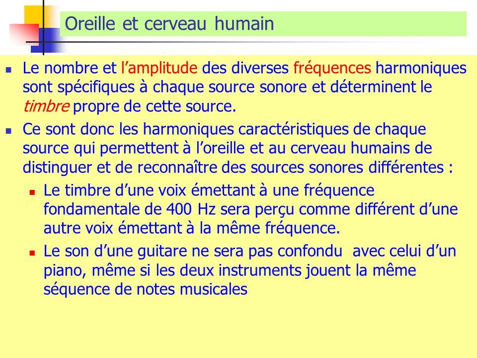 Oreille et cerveau humain