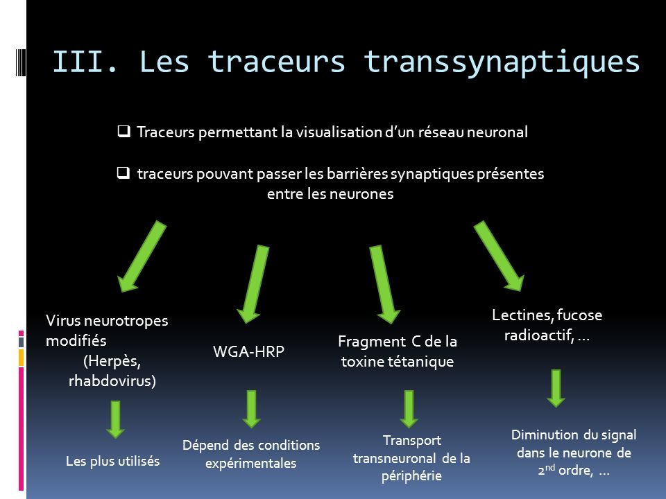 III. Les traceurs transsynaptiques