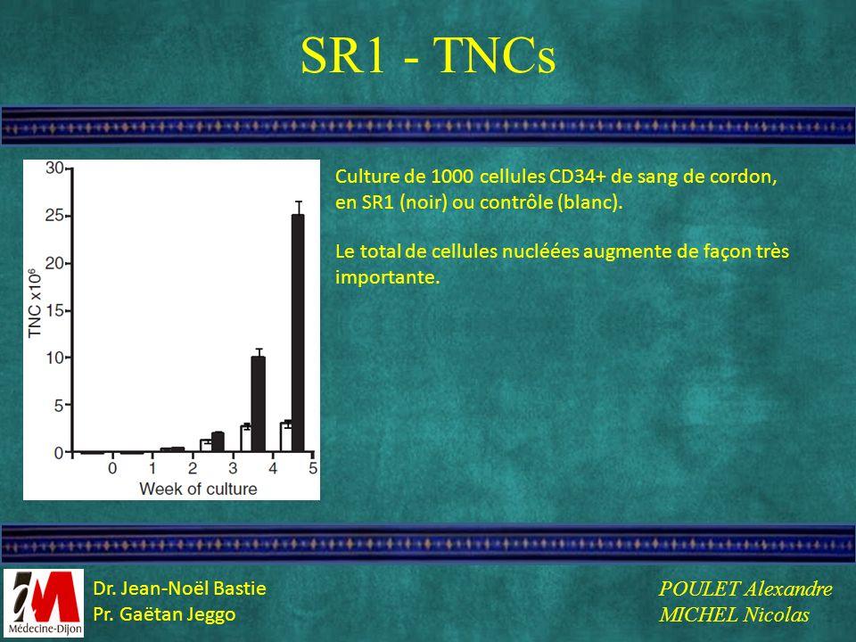 SR1 - TNCs Culture de 1000 cellules CD34+ de sang de cordon, en SR1 (noir) ou contrôle (blanc).