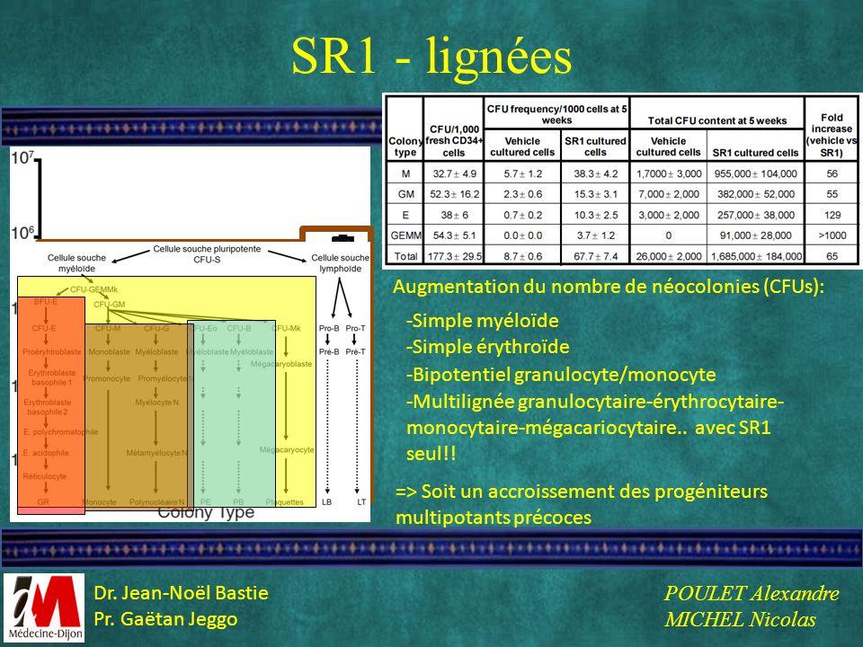 SR1 - lignées Augmentation du nombre de néocolonies (CFUs):