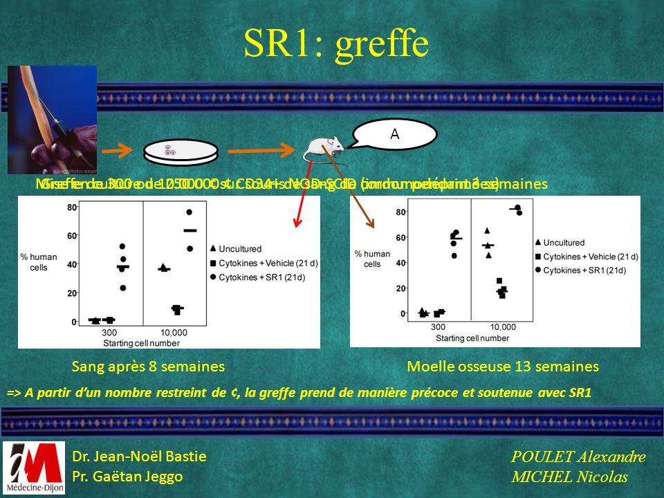 SR1: greffe A. Mise en culture de 250.000 ¢ CD34+ de sang de cordon pendant 3 semaines.