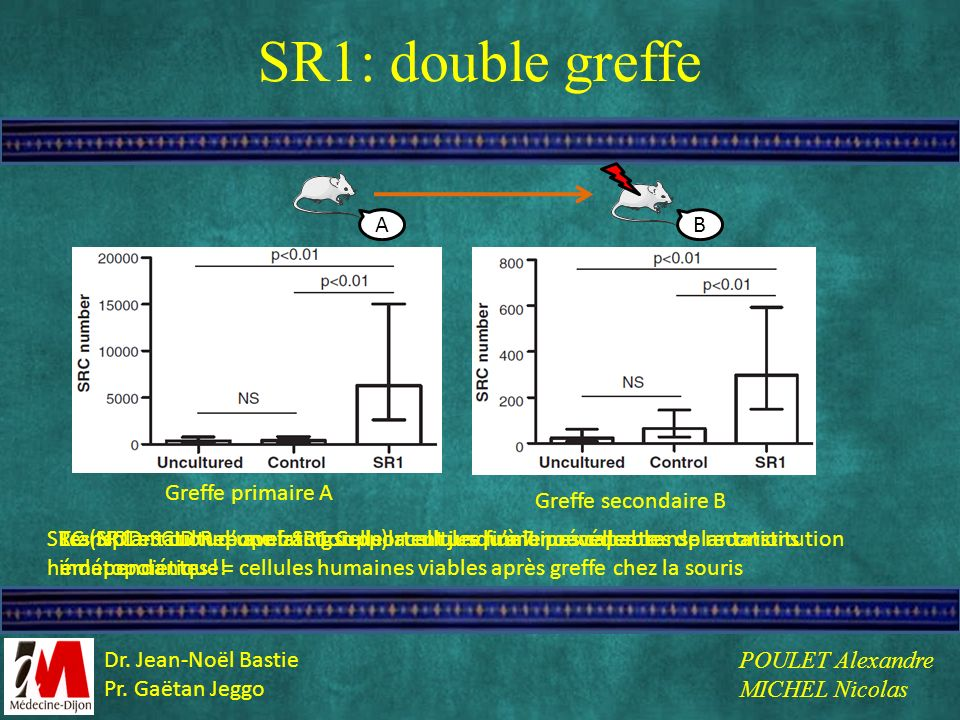 SR1: double greffe A B Greffe primaire A Greffe secondaire B