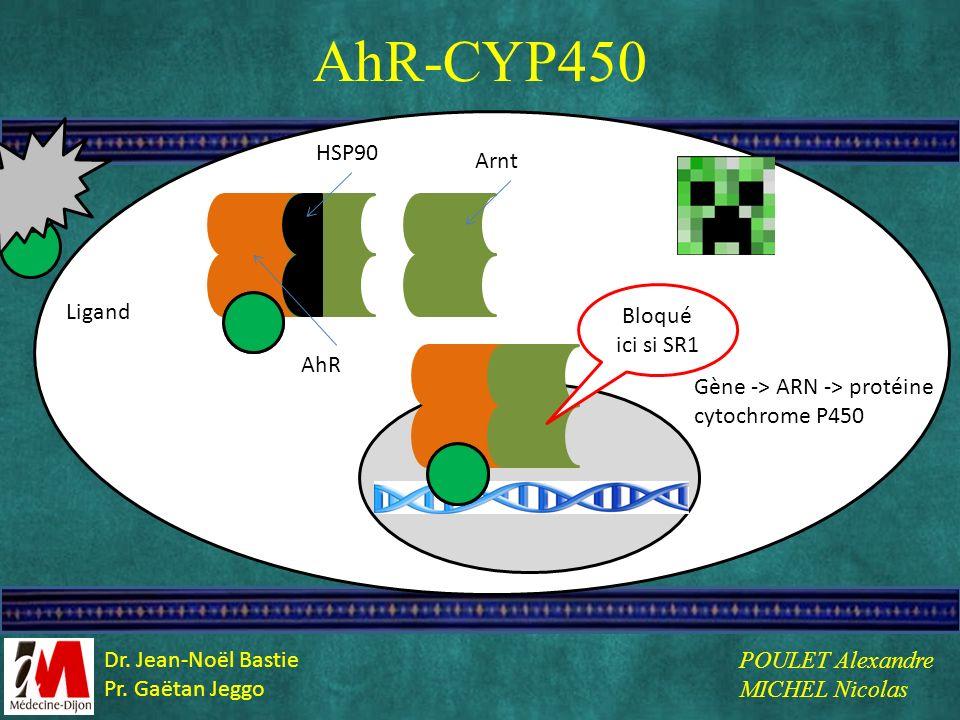 AhR-CYP450 L HSP90 Arnt Bloqué ici si SR1 Ligand AhR