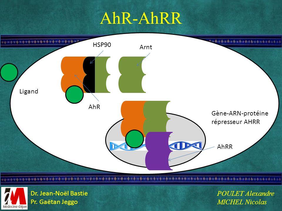 AhR-AhRR L HSP90 Arnt Ligand AhR Gène-ARN-protéine répresseur AHRR