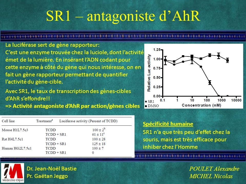 SR1 – antagoniste d'AhR La luciférase sert de gène rapporteur: