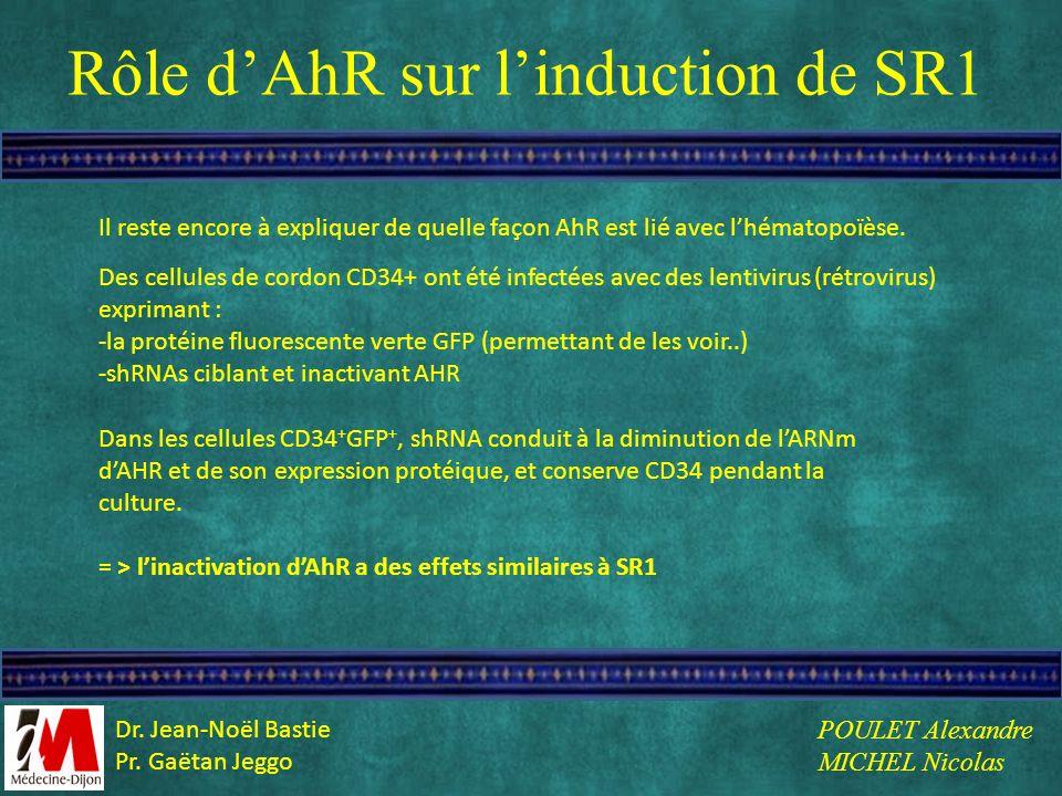 Rôle d'AhR sur l'induction de SR1