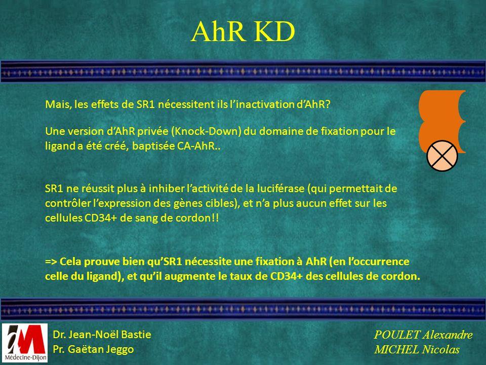 AhR KD Mais, les effets de SR1 nécessitent ils l'inactivation d'AhR