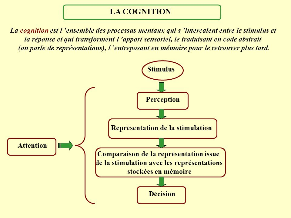 LA COGNITION La cognition est l 'ensemble des processus mentaux qui s 'intercalent entre le stimulus et.