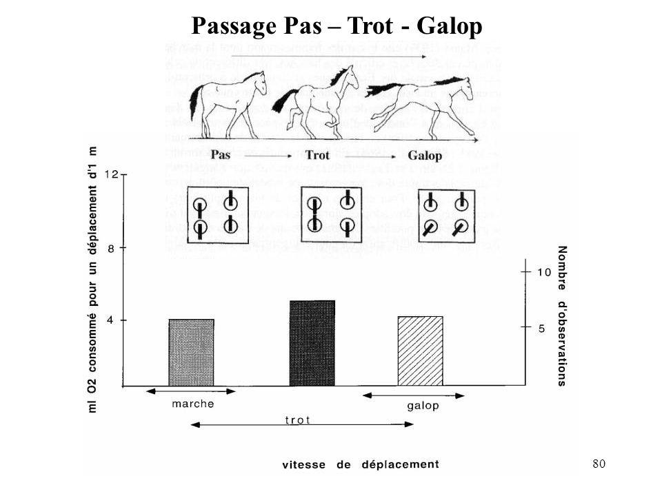 Passage Pas – Trot - Galop