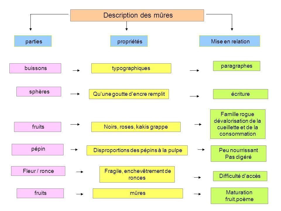 Description des mûres parties propriétés Mise en relation paragraphes