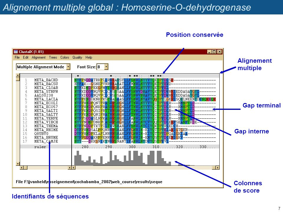 Alignement multiple global : Homoserine-O-dehydrogenase