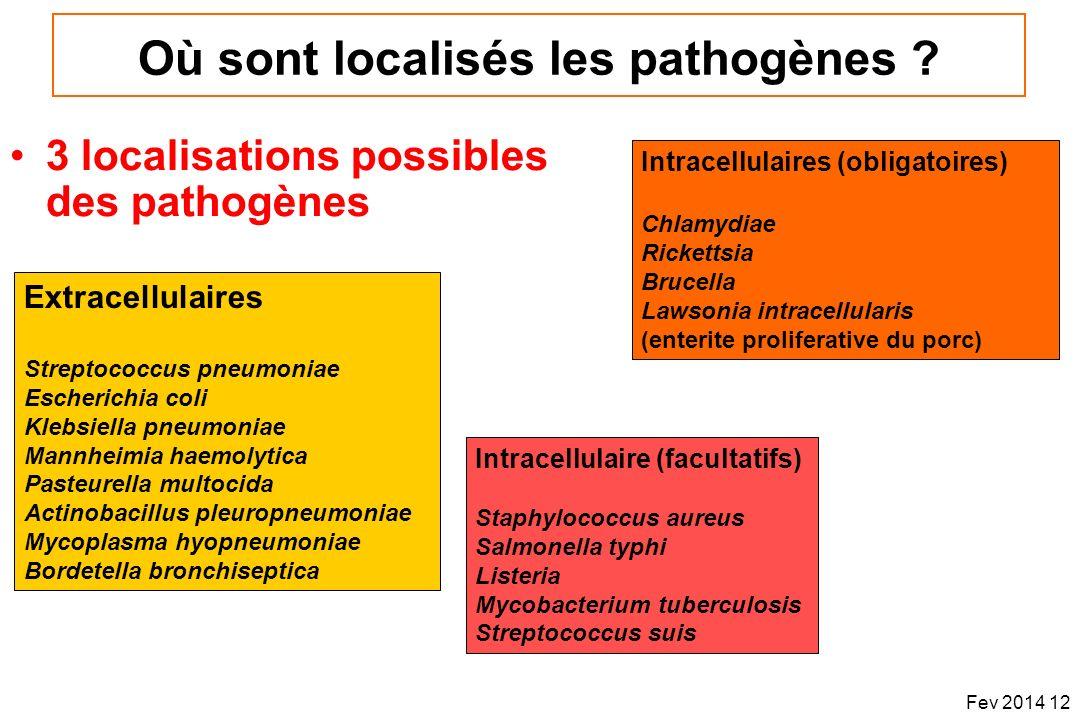 Où sont localisés les pathogènes