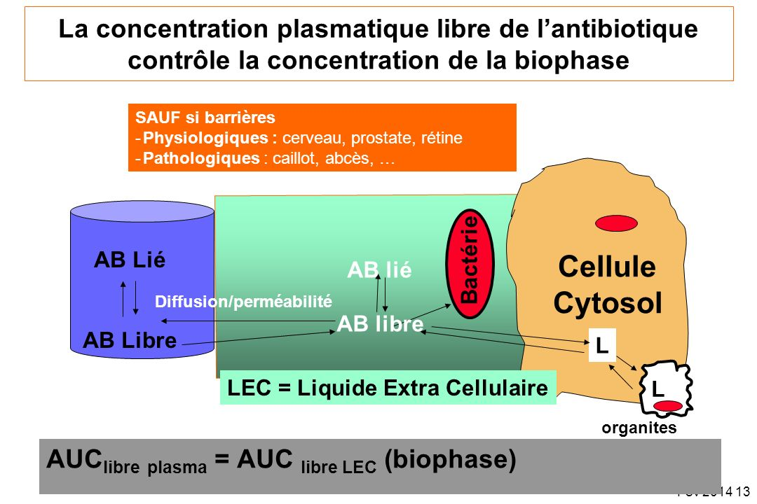 La concentration plasmatique libre de l'antibiotique contrôle la concentration de la biophase