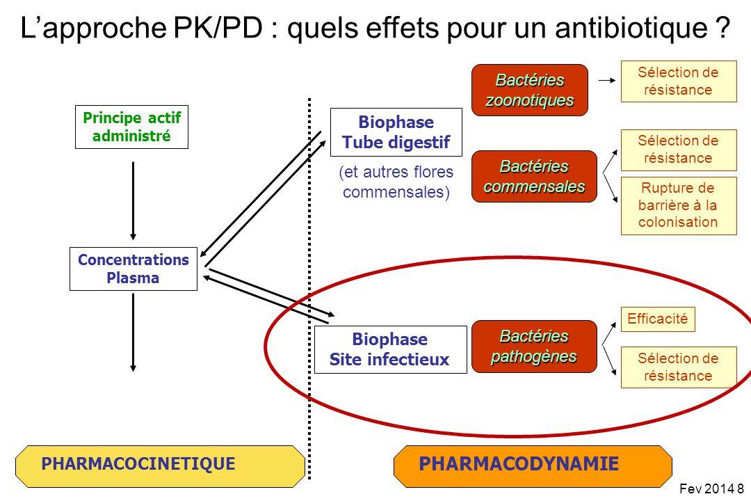 L'approche PK/PD : quels effets pour un antibiotique