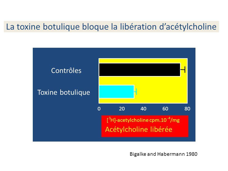 La toxine botulique bloque la libération d'acétylcholine
