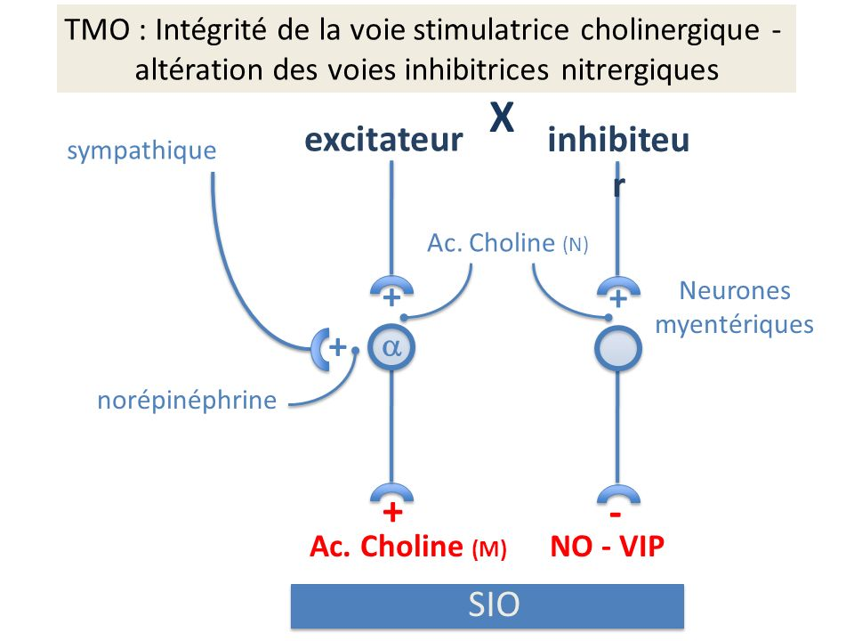 X + - excitateur inhibiteur + + + SIO