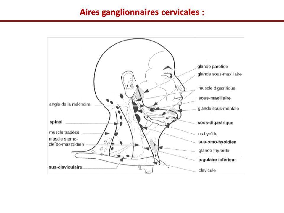 Aires ganglionnaires cervicales :