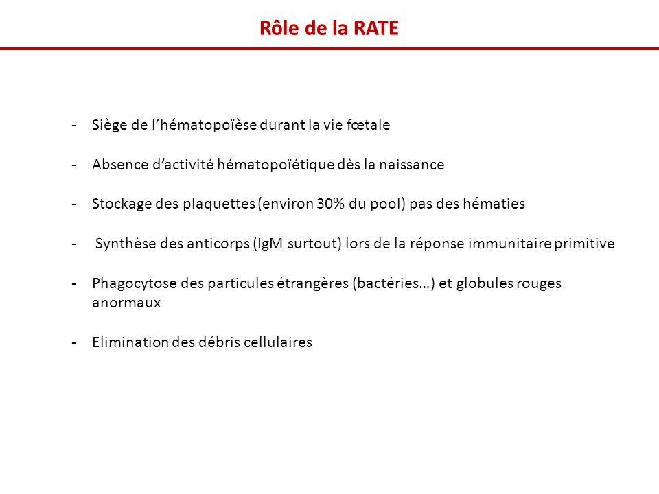 Rôle de la RATE Siège de l'hématopoïèse durant la vie fœtale