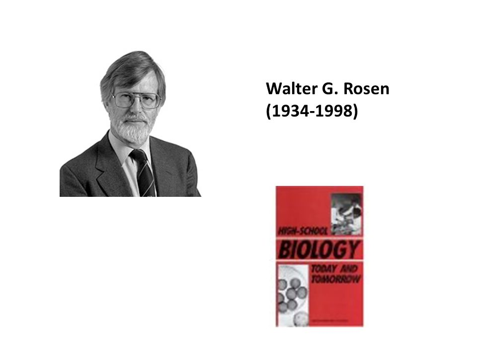 Walter G. Rosen (1934-1998)